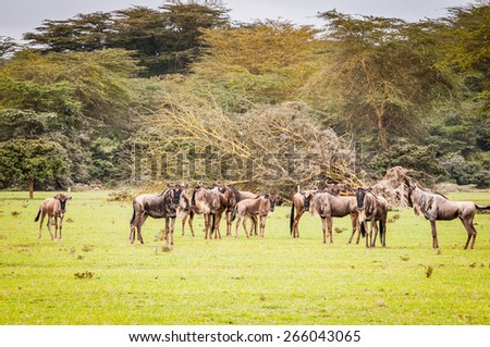 Antelopes in Africa - stock photo