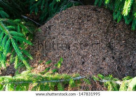 anthill - stock photo