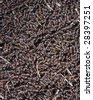 anthill background of Formica sp. - stock photo