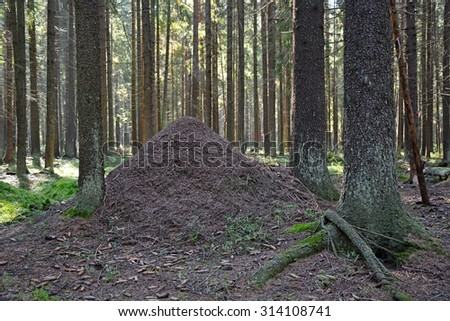Anthill in the forest  - stock photo