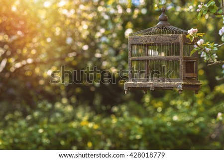 Antique Edwardian birdcage in spring blossom - stock photo