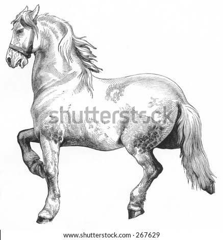 antique horse drawing - stock photo