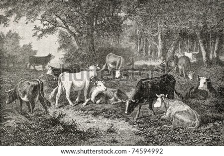 Antique illustration of a herd grazing in the wood. Drawing of Van Marcke, published on L'Illustration, Journal Universel, Paris, 1868 - stock photo