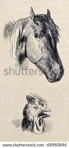 Antique illustrations of horse and rooster heads. Original, from drawing of Blanchard and Lambert, was published on L'Illustration, Journal Universel, Paris, 1860 - stock photo