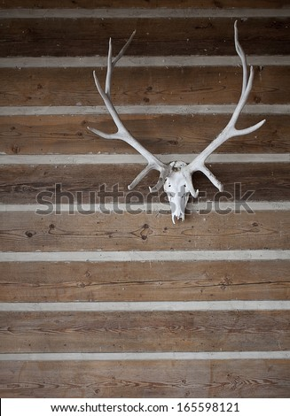 antlers hanging on the wooden wall - stock photo