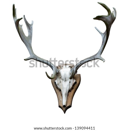 Antlers on the white background