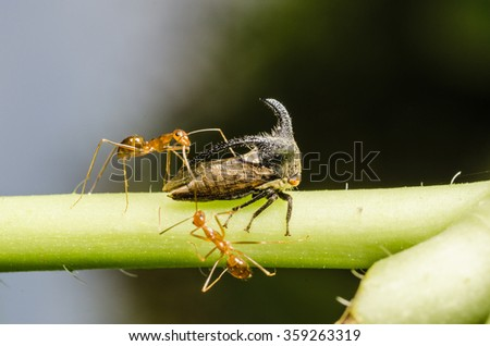 ants and insect - stock photo