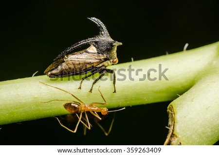 ants and insect. - stock photo