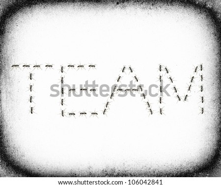 ants assembled to spell the word Team - stock photo
