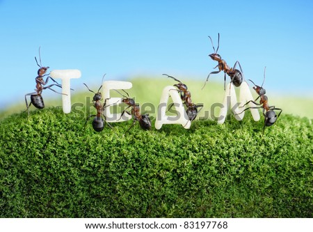 ants constructing word team with letters , teamwork concept - stock photo