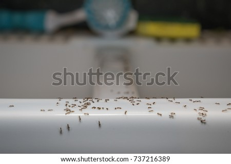 Ants Crawl On Kitchen Sink. Common Household Pest Problem.Ants Can Enter  Through Even