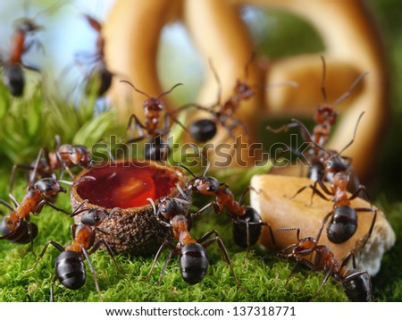 ants drinking honey eating cake dancing and singing at banquet in anthill, ant tales - stock photo