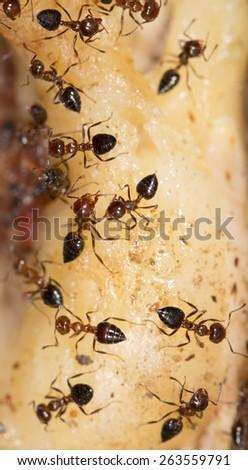 ants eat - stock photo