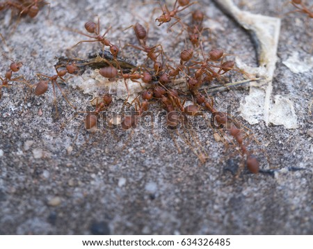 Ants Help to  Take a Food