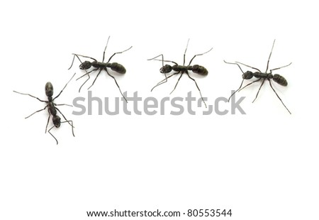 ants in line - stock photo