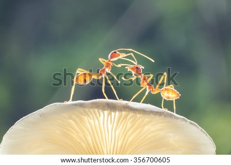 Ants,insect,nature - stock photo