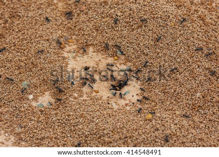 Ants nest in nature - stock photo