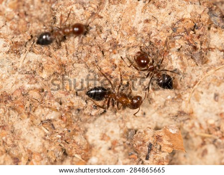 ants on a brown wall