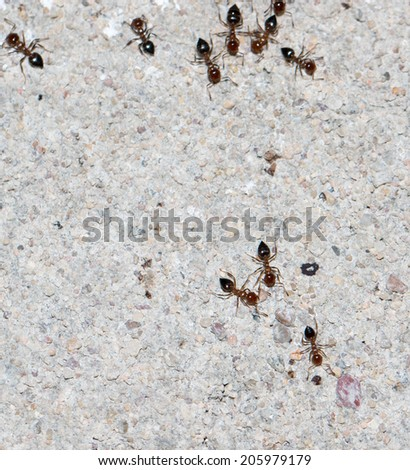 ants on a concrete wall close-up - stock photo