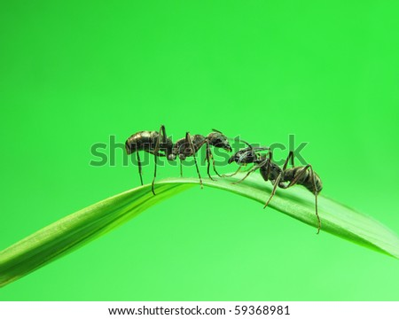ants on a green grass - stock photo