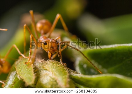 Ants on a green leaf - stock photo