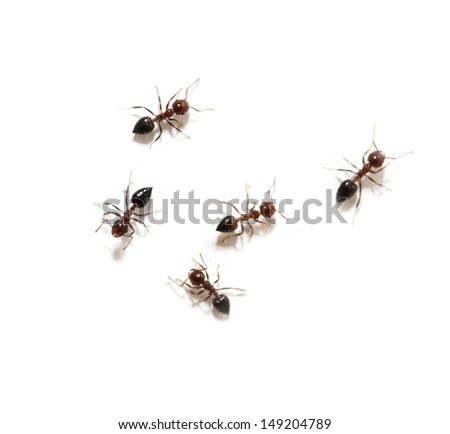 ants on a white background. macro - stock photo