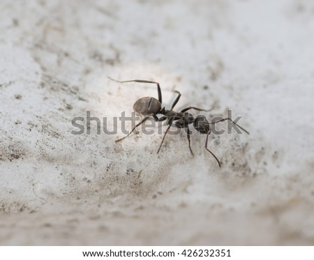 Ants on concrete surface. Macro with shallow depth of field. - stock photo