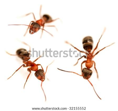Ants Set - stock photo