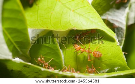 Ants soldier protect the house - stock photo