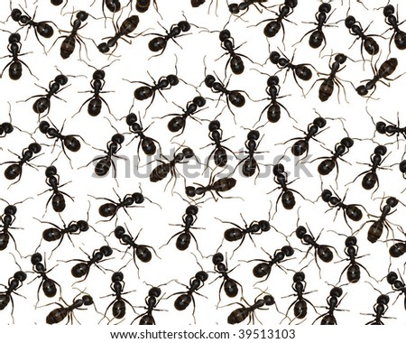 Ants Unleashed - stock photo