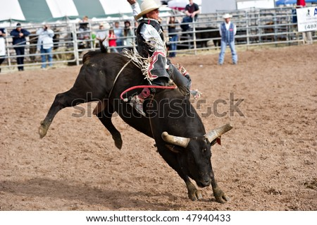APACHE JUNCTION, AZ - FEBRUARY 27: A cowboy rides a bucking bull in the bull riding competition at the Lost Dutchman Days Rodeo on February 27, 2010 in Apache Junction, Arizona. - stock photo