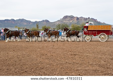 Budweiser Clydesdales Stock Images Royalty Free Images