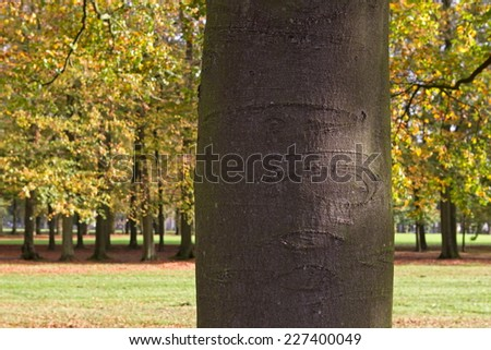 Apeldoorn, Netherlands - October 31, 2014: detail of beech part of beech avenue leading to Het Loo Palace in Apeldoorn.  - stock photo