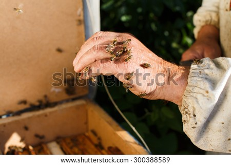 Apiarist holding bees on his hand which is above the hive, in the garden, close up