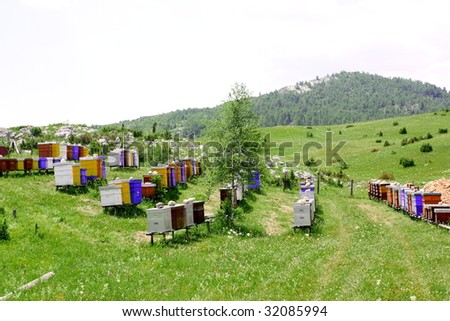 Apiary - stock photo