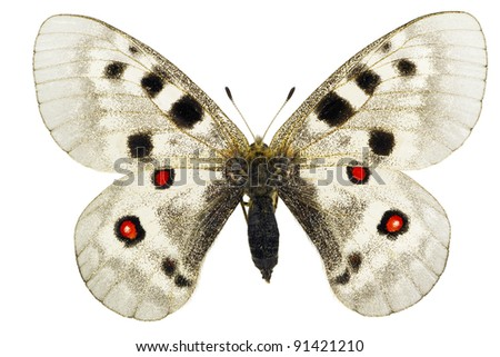 Apollo or Mountain Apollo (Parnassius apollo) isolated on a white background