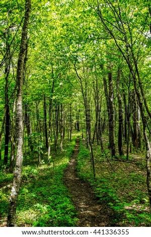 Appalachian Trail in Spring Appalachian Trail, Appalachian Mountains, Tennessee  - stock photo