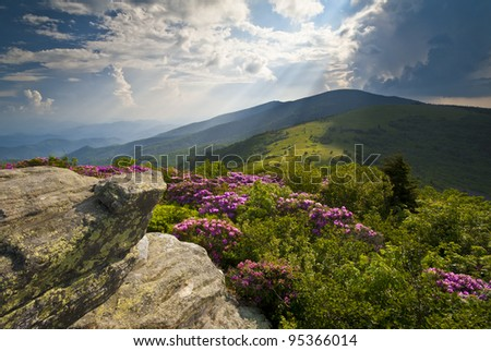 Appalachian Trail Roan Mountains Rhododendron Bloom on Blue Ridge Peaks scenic landscape photography - stock photo