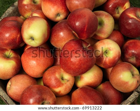 apple above in a tub - stock photo
