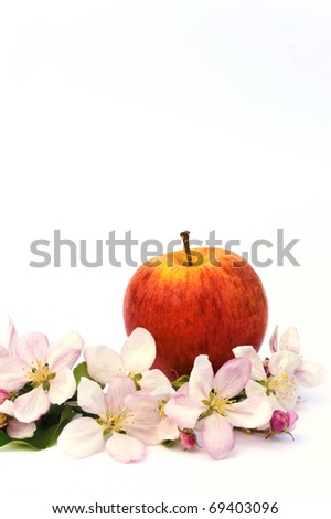 Apple and apple tree blossoms - isolated - stock photo