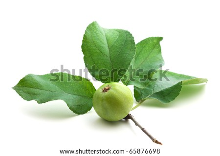 apple and leaf isolated on a white  background