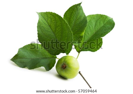 apple and leaf  isolated on white