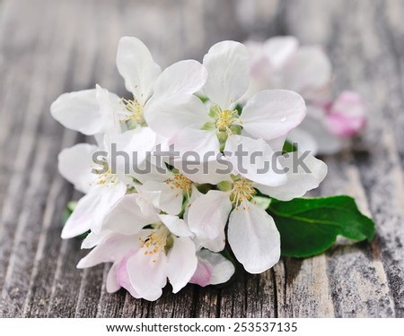 Apple blossom on a old wooden background - stock photo