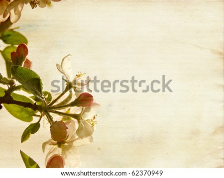Apple blossoms with beige toned aged paper texture reaching towards the sun with copy space. - stock photo
