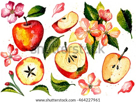 Apple branches with blossom, leaves and fruits set. Watercolor apple fruit and apple bloom isolated on white background. Fruit on branch with leaves collection. Hand drawn illustration.Set of apples.