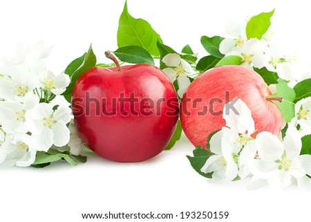 Apple flowers and ripe red apples on a white background - stock photo