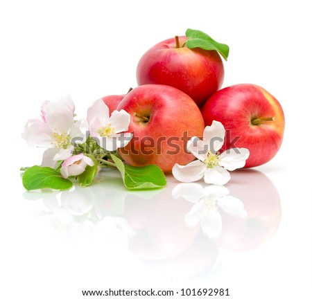 apple flowers and ripe red apples on a white background close-up of the reflection - stock photo