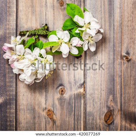 Apple flowers on wooden background. Blossoming tree branch in springtime. Top view, flat lay
