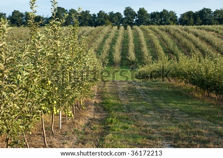 apple garden landscape - stock photo