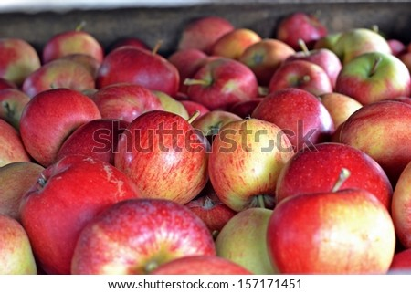 apple harvest in the wooden crates - stock photo